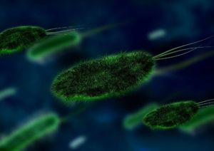 germs bacteria viruses fungus